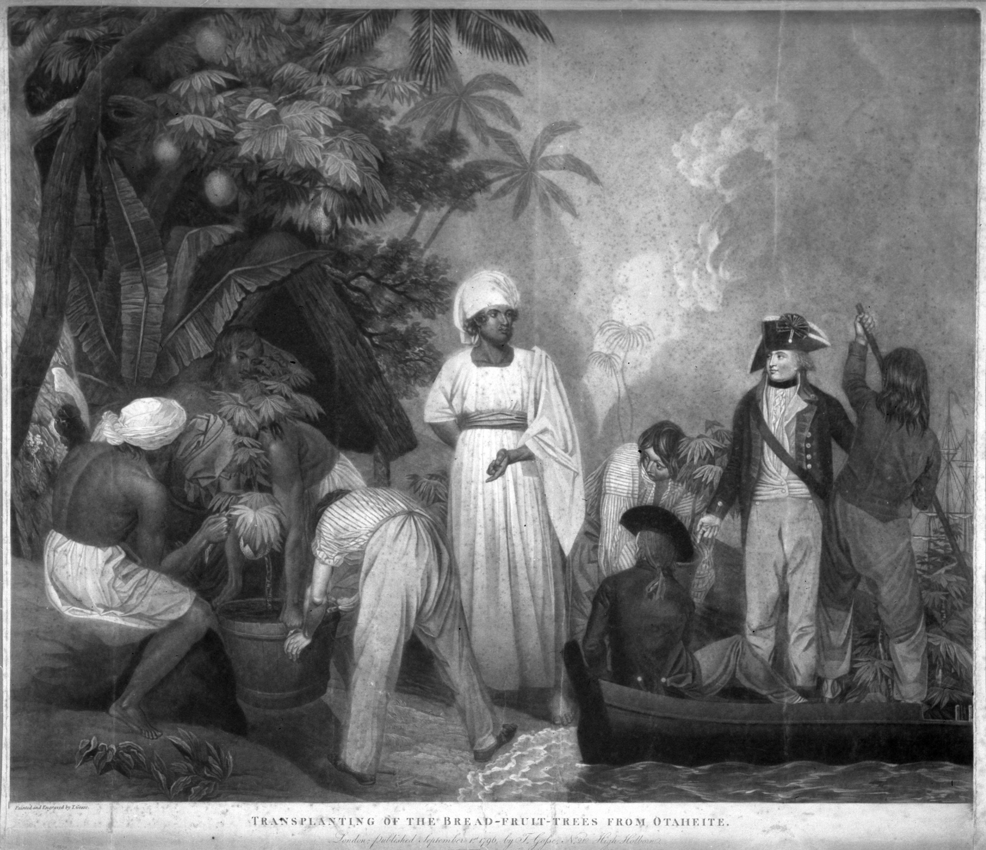 Bligh taking breadfruit trees from Otaheite